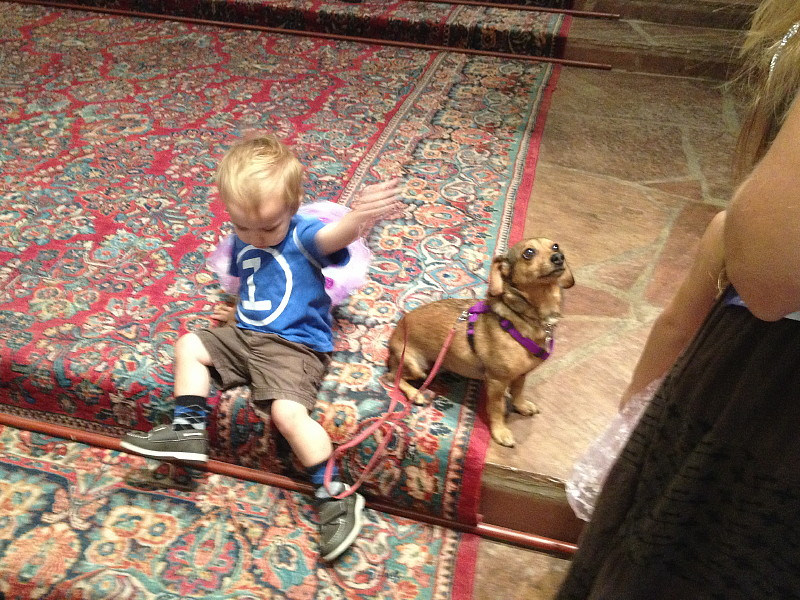 A young worshiper and dog at the Blessing of the Animals